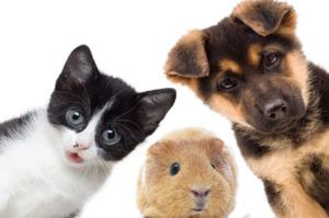 Umzug Hund Katze - Tieren umziehen