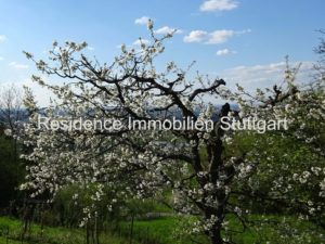 Gartengrundstück Stuttgart Rosenberg